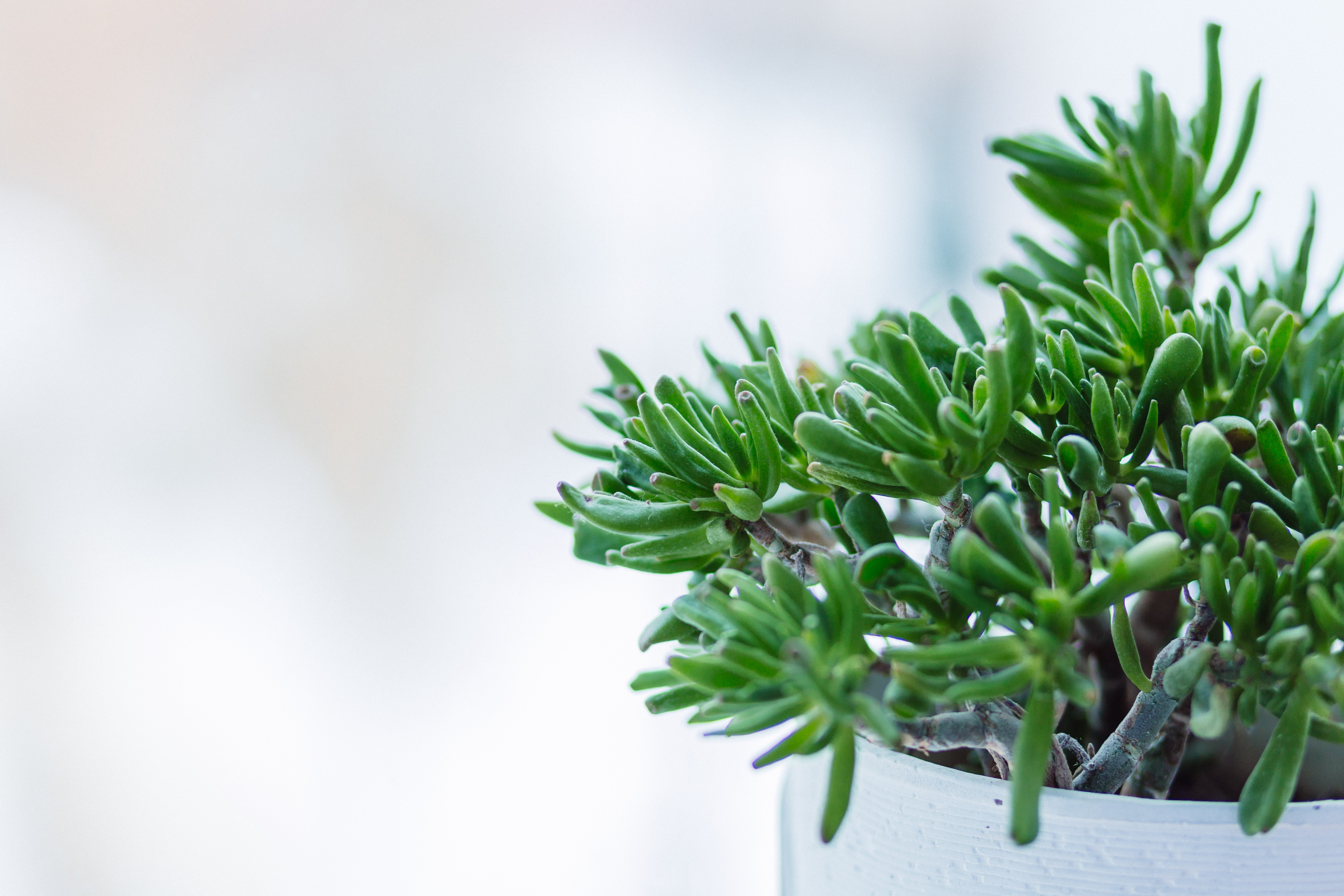 Indoor Plants that helps improve the air quality of your home